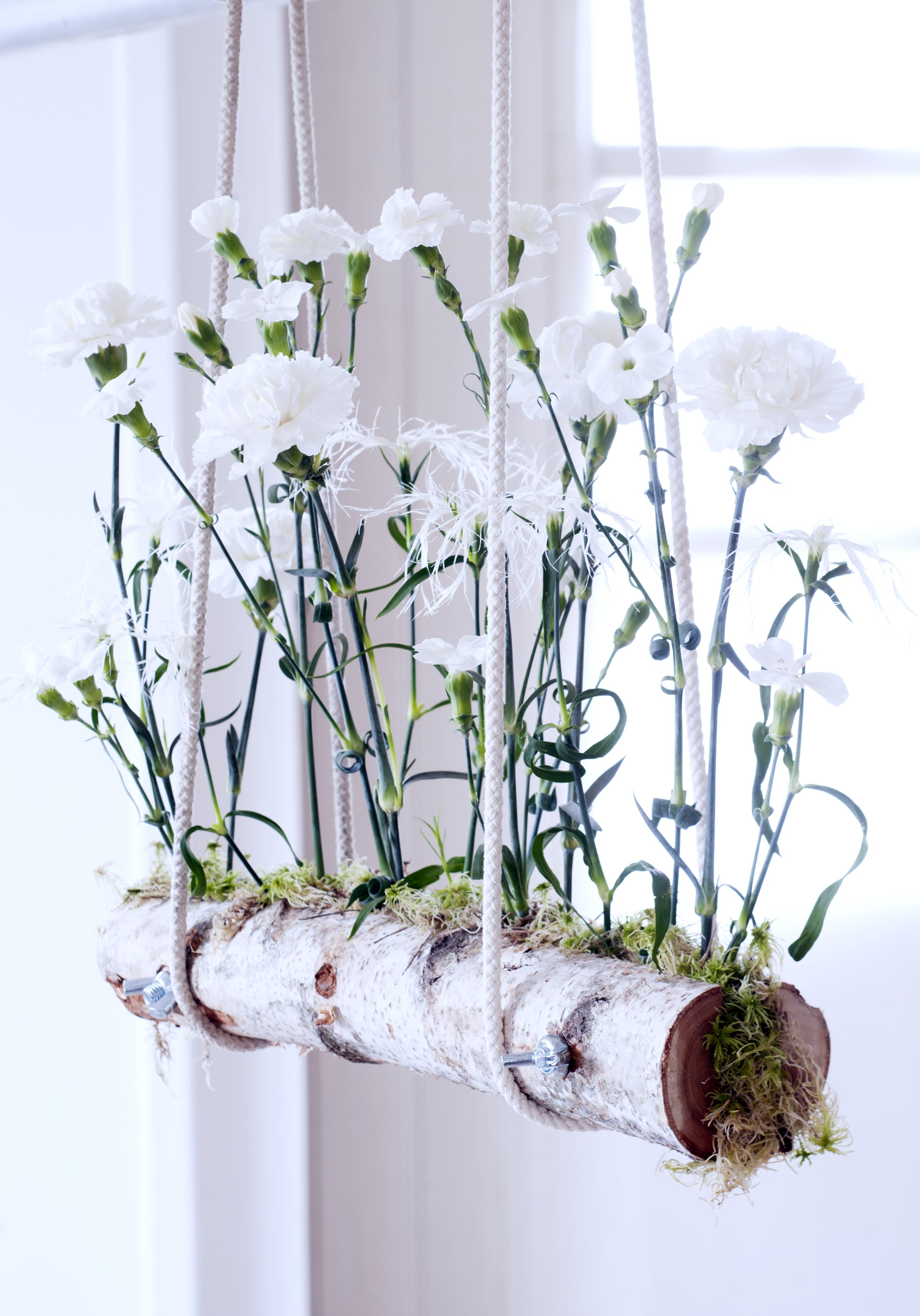 zwevende anjers mooi wat bloemen doen. Black Bedroom Furniture Sets. Home Design Ideas