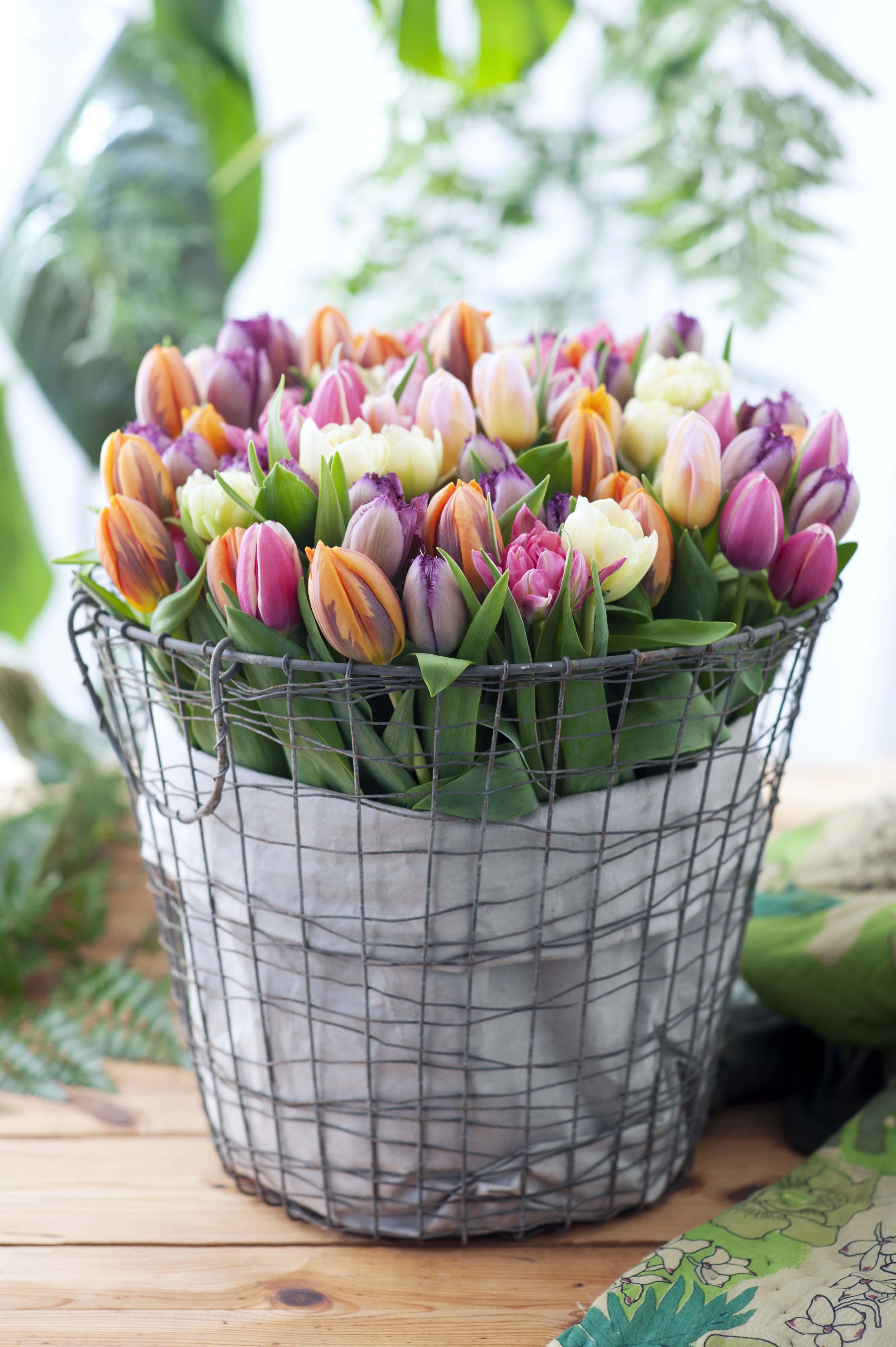 Vrolijk van de tulp mooi wat bloemen doen - Foto van decoratie ...