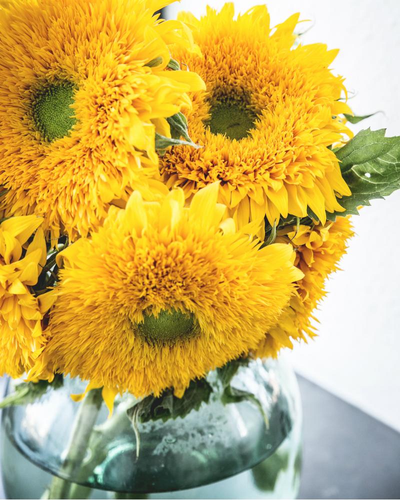 zonnebloem mooi wat bloemen doen. Black Bedroom Furniture Sets. Home Design Ideas