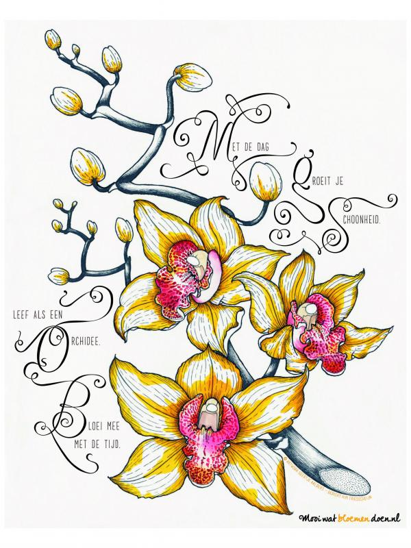 Bloemlezing de orchidee