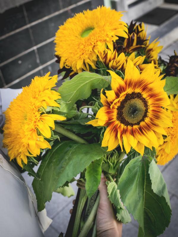 Zonnebloemen soorten Teddy zonnebloem, de Prade red, California Wonder, Ruby en Ring of Fire Mooiwatbloemendoen.nl